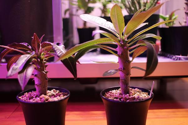 ガラス温室栽培のウィンゾリー