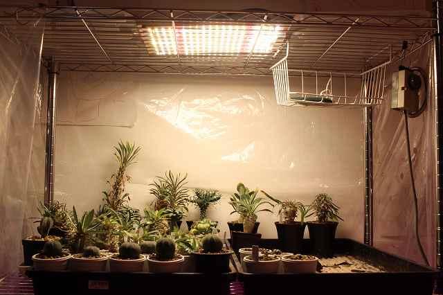 植物育成用LED