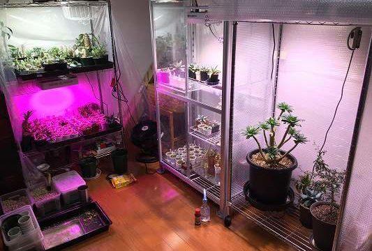 室内簡易温室