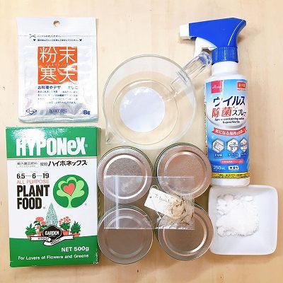 チランジアの無菌培養