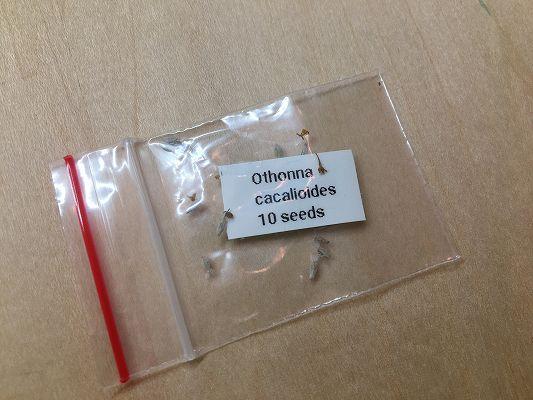 オトンナカカリオイデスの種子